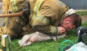 Gestul EMOȚIONANT al unui POMPIER: a salvat un cățel dintr-un incendiu! GALERIE FOTO