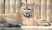 A murit atracția grădinii zoologice Băneasa