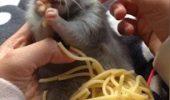 Filmulețul care a devenit VIRAL PE INTERNET. Un șoricel mănâncă paste ca un adevărat italian. Clipul a uimit o lume întreagă