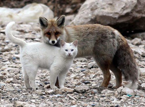 PRIETENII SURPRINZĂTOARE, dar adorabile între animale I GALERIE VIDEO