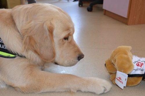 În memoria lui Aksel, câinele-erou care a ajutat zeci de copii cu autism