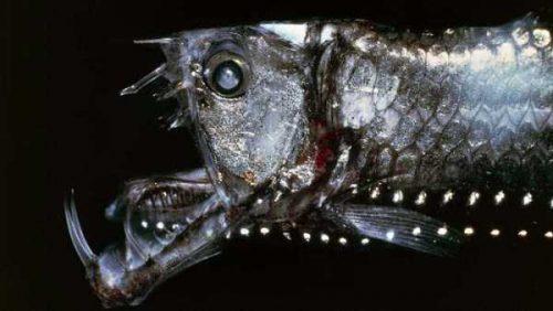 Aceste creaturi te vor ține departe de OCEAN