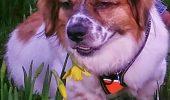 EXCLUSIV ANIMAL ZOO! Povestea lui Mollie! Cățelușa salvată din România, vedetă în Anglia I GALERIE FOTO-VIDEO