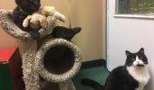 O pisică, un câine și șobolan sunt de NEDESPĂRȚIT! Cum reacționează când sunt separați FOTO-VIDEO