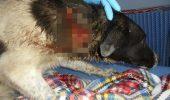 Ce s-a întâmplat cu un câine după ce a fost folosit pe post de țintă și împușcat fără milă I VIDEO