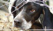 Cruzimea față de animale va fi pedepsită. Uite câți ani va sta după gratii o persoană care va ucidere fără drept sau va maltrata o vietate