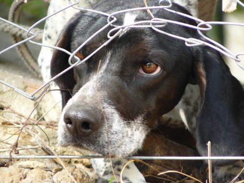 Cruzimea față de animale va fi pedepsită? Uite câți ani va sta după gratii o persoană care va ucidere fără drept sau va maltrata o vietate