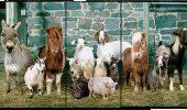 Astăzi este…. ziua INTERNAȚIONALĂ a ANIMALELOR!