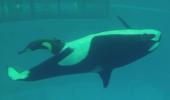 O balenă care abia a NĂSCUT cucerește inimile internauților. Priviți momentul!