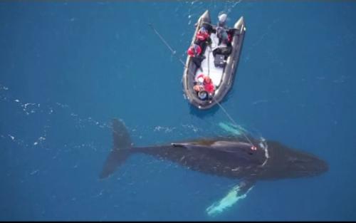 Au instalat camere video pe balene din Antarctica. Uite ce au descoperit I VIDEO
