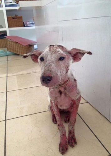 Caz șocant în Marea Britanie. Cățelul a ajuns pe mâna medicilor veterinari într-o stare de șoc. L-a luat şi l-a îngrijit