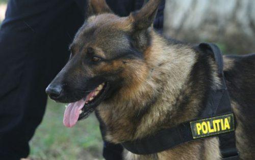 Odata EROI, acum POVARĂ! Trei câini polițiști sunt scoși la vânzare. Uite cât costă