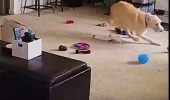 Un cățel își FACE DE CAP și profită de absența stăpânilor! I VIDEO AMUZANT