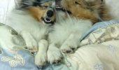 Când animalul tău de companie se întinde în tot patul!