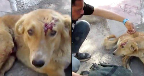 A fost lovit de o mașină, nu putea merge, a zăcut pe marginea drumului. Uite cum a reacționat când un om a venit să-l salveze I VIDEO