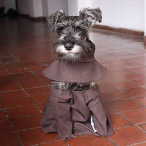 El este câinele –călugăr care a cucerit o lume întreagă!