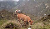 A fost zărită o specie de câine dispărută de o jumătate de secol