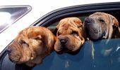 Capcane pentru HINGHERI. Mai poate poliția să-ți ridice mașina dacă ai un animal de companie în interior?