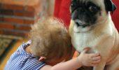 Am aflat de ce NU trebuie să-ți ÎMBRĂȚIȘEZI câinele