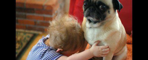 """Am aflat de ce NU trebuie să-ți ÎMBRĂȚIȘEZI câinele! """"Sunt deranjaţi…"""""""