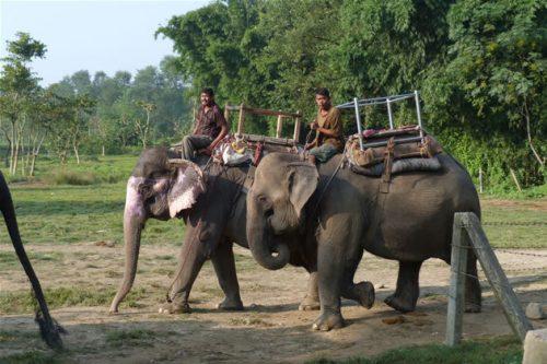 Momentul când elefanții dintr-un parc din Nepal sunt atacați de un rinocer I IMAGINI ȘOCANTE