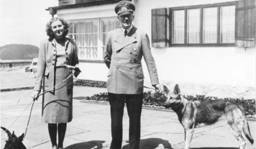 Știai că naziştii au vrut să creeze O ARMATĂ DE CÂINI capabili să scrie şi să vorbească?