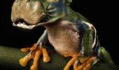 IMAGINI TERIFIANTE ȘI ADORABILE în același timp, cu animale HIBRID | GALERIE FOTO