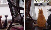 Fotografii incredibile cu pisici care au crescut, înainte și după! Imaginile mai jos reprezintă drăgălășenia absolută!