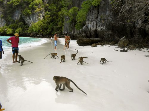 MAIMUȚELE, stăpânele unei insule din Thailanda! | VIDEO