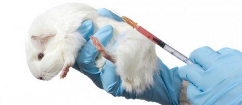 Știai că produsele tale cosmetice sunt testate pe animale? I FOTO