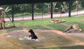 """9 ani a fost captiv în """"VESTA DE TORTURĂ""""! Uite cum se comportă când vede pentru prima oară apa"""