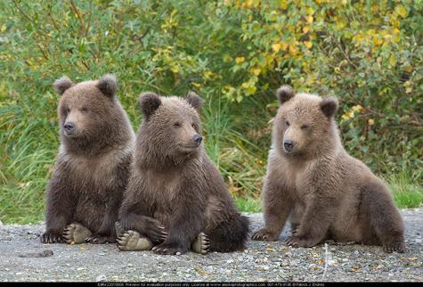 Trei ursuleți, VEDETE ale Rezervației de la Zărnești