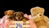 Ultimele trei săptămâni pentru cei care vor să doneze 2% din impozitul pe venit pentru animale