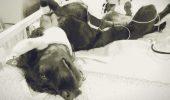 O boală de piele, cel mai mare COȘMAR al fiecărui proprietar de câine