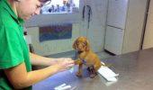 GALERIE FOTO HAIOASĂ I Uite cât de FRICOASE sunt animalele atunci când merg la doctor