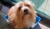 Un Yorkshire terrier și-a sacrificat viața pentru a-și salva stăpâna. Uite ce a făcut acest mic EROU