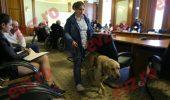 Cum au ajuns câinii-ghizi în Parlament