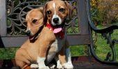 Adoptă și tu! O campanie pentru iubitorii de animale