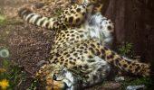 Dacă ești iubitor de animale aceste fotografii îți vor tăia respirația I GALERIE FOTO