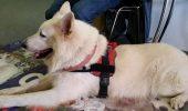 Rasă de câine RECOMANDATĂ pentru copii. El este cel mai POTRIVIT animal de companie pentru micuțul tău / FOTO în articol