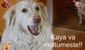 Cum s-au mobilizat iubitorii de animale pentru a-l ajuta pe Radu Termure să-și salveze adăpostul