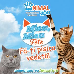 Miau, miau Foto! Fă-ți pisica vedetă! Intră în concurs