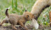 Nu-i așa că sunt cele mai DRĂGUŢE animale din LUME? O să ţi se topească INIMA când le vei vedea I  FOTO