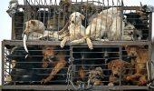 TRANSFORMĂ 2% din impozitul pe venit în 100% pentru viața ANIMALELOR
