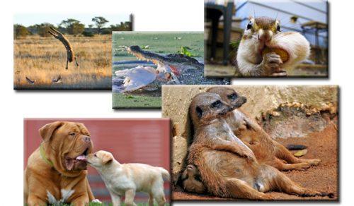 Fotopovești cu animale! IMAGINI care nu mai au nevoie de niciun COMENTARIU