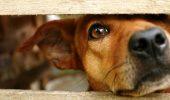 Caz șocant în Sibiu! Doi bărbați au maltratat un câine