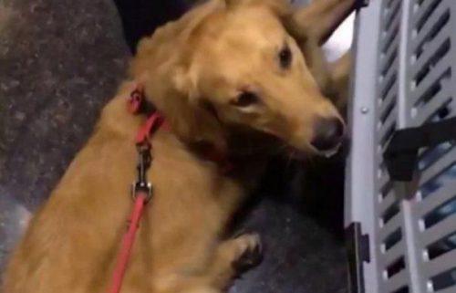 Scandal MONSTRU la o companie aeriană. Au TORTURAT un câine. Starea lui este CRITICĂ