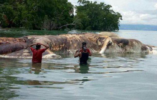 Oare chiar există o astfel de creatură? MONSTRU MARIN descoperit și fotografiat în Indonezia I GALERIE FOTO ȘOC