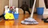 Cum faci rapid casa curată când ai animale de companie