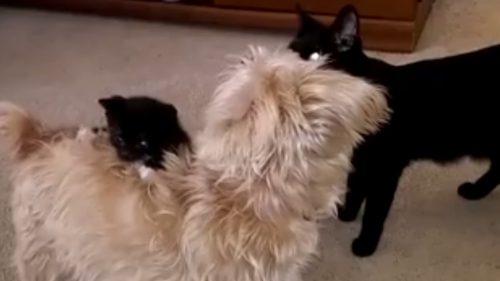 VIDEO AMUZANT! Animalele fac LUCRURI TRĂSNITE!